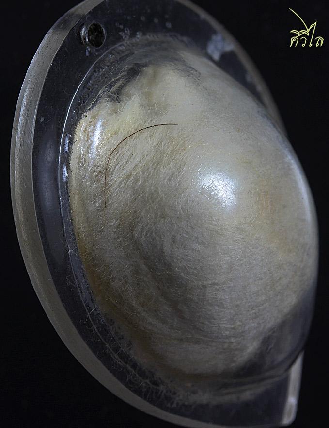 เต่าสำลีครูบาชัยวงศ์ 2.8 e.jpg