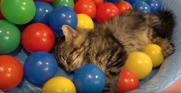 10catsballs3.jpg