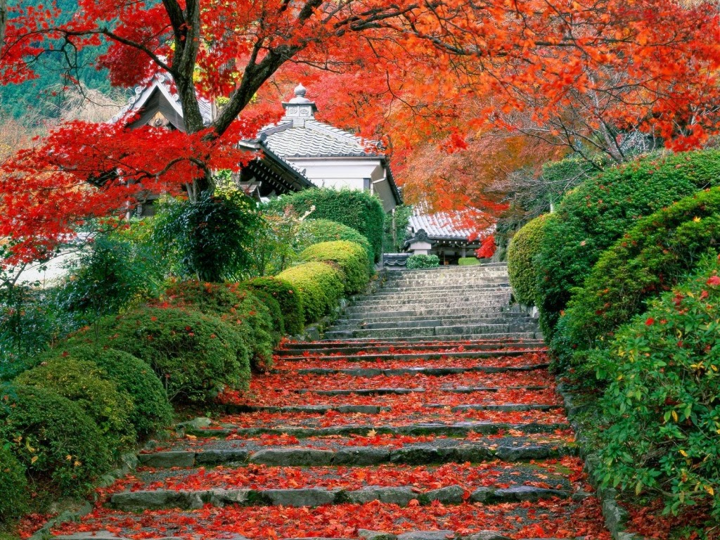 1229625_red-rose-garden-wallpaper-hd.jpg