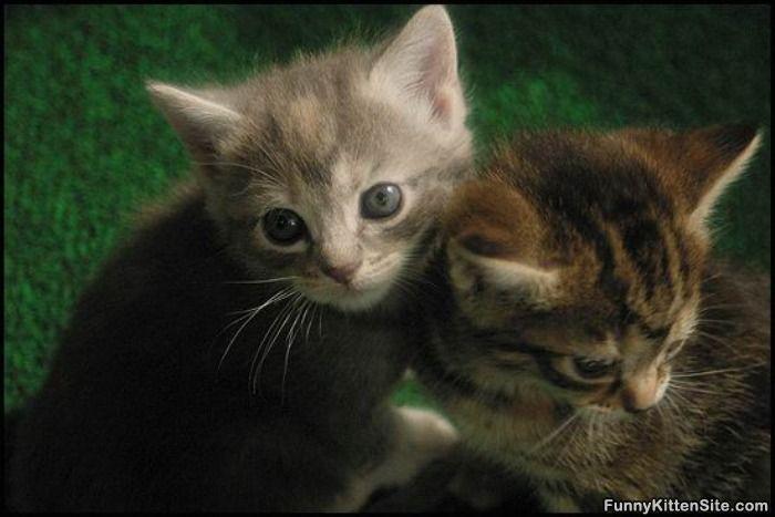 2_Little_Kittens.jpg