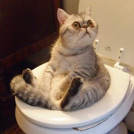 CatTBowl.jpg