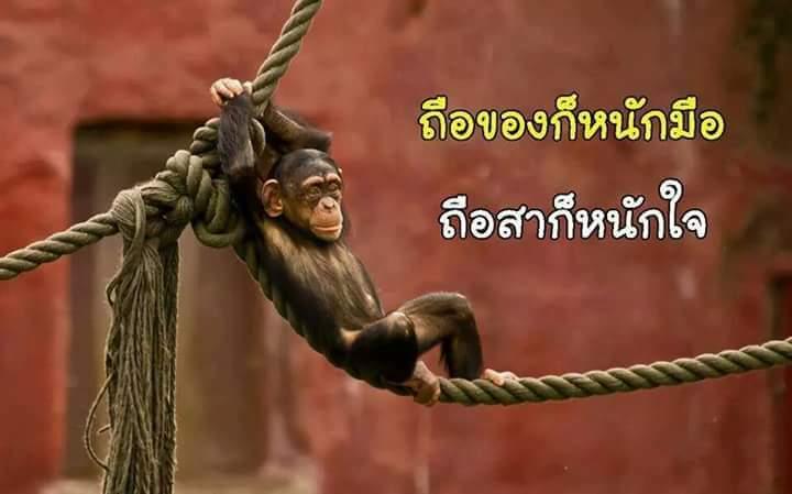 FB_IMG_1543823168540.jpg
