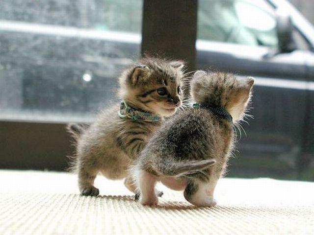 February-02-2012-00-21-42-kittensplayingtag.jpe