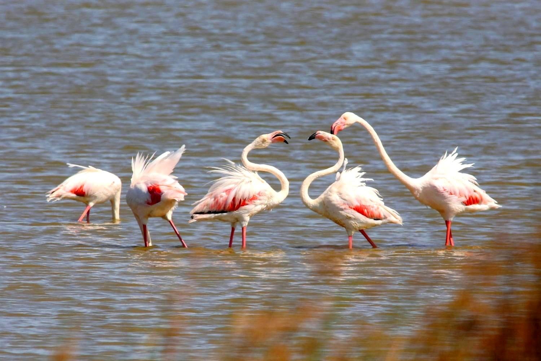 Flamingo_79143.jpg