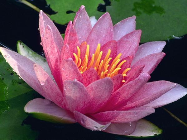 flower_038.jpg