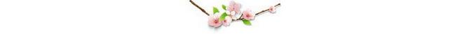 flower_050.jpg