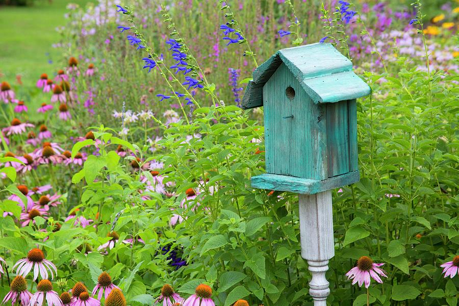 Friday blue-birdhouse-in-f.jpg