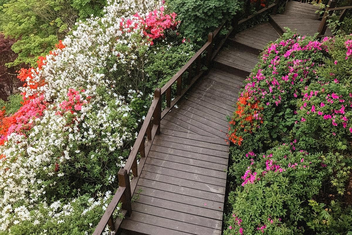 Gapyeong_Garden-Of-Morning-Calm_9.jpg