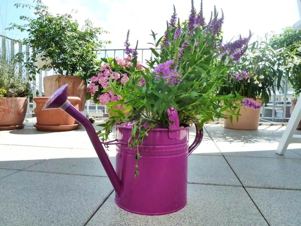 garden-watering-can-casting-purple-wallpaper-preview.jpg