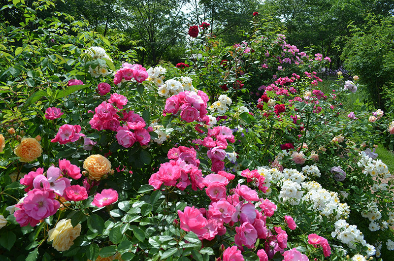 hokkaido-garden-09.jpg