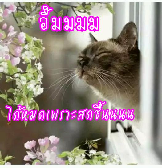 image_1493048511004.png