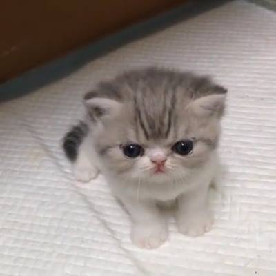 img-this-little-kitty-is-too-cute-175.jpg