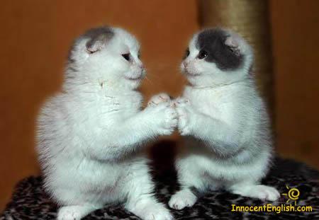 kitten_play_by_duallygirl178-d4havsi.jpg