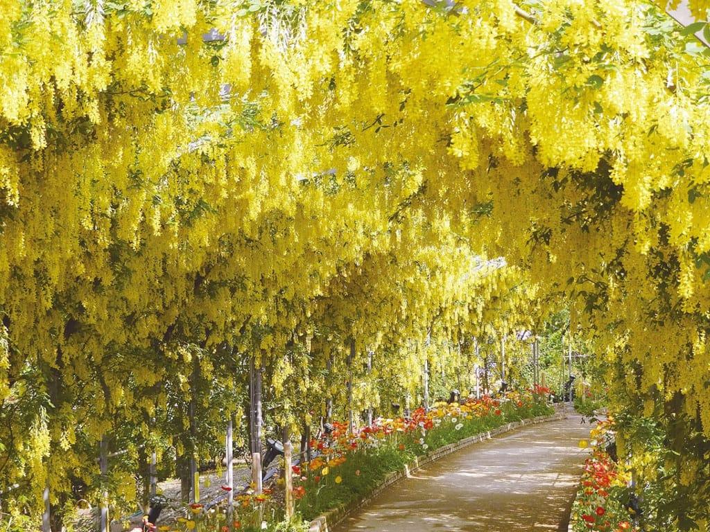 Monday ashikaga_flowerpark_20160528_09.jpg