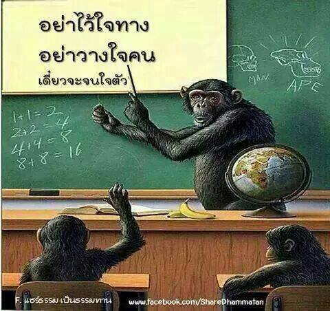 monkey teaching.jpg