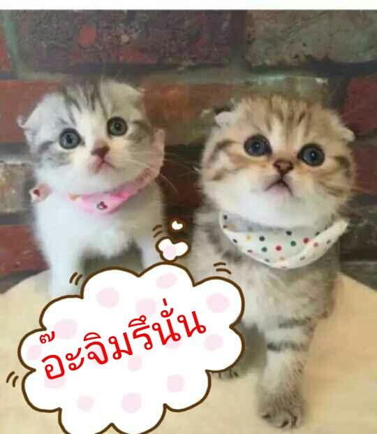 PhotoEditor_1496360501418.jpg