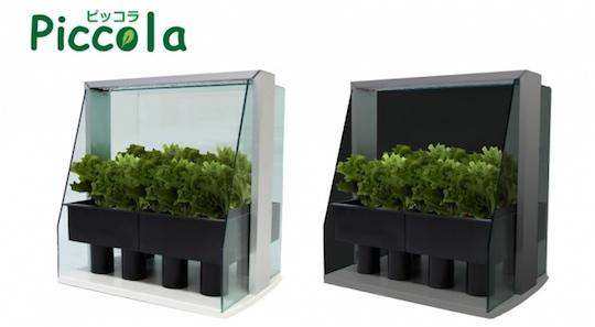 piccola-hydroponic-grow-box-vegetables-1.jpg