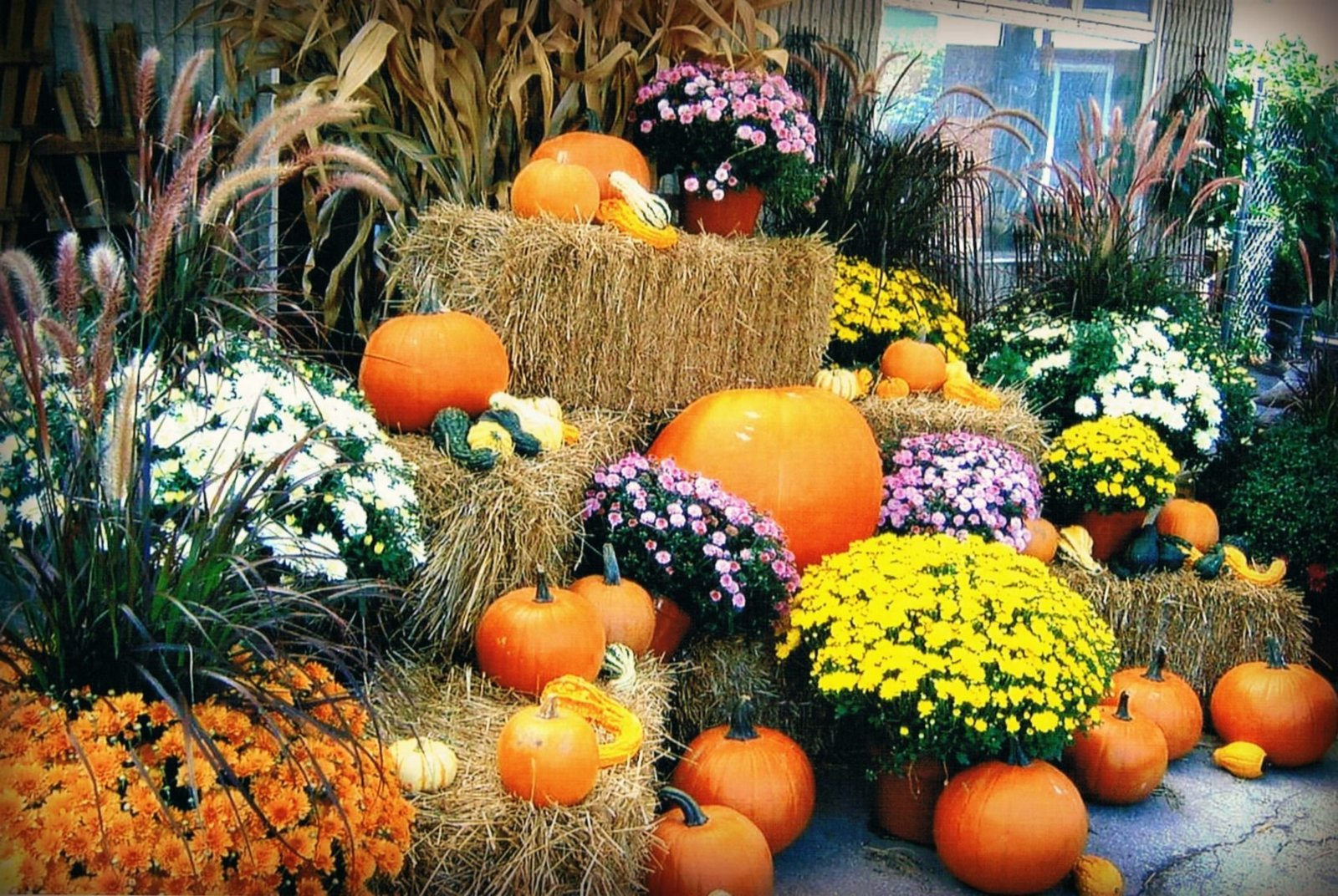 pumpkins-and-straw-min.jpg