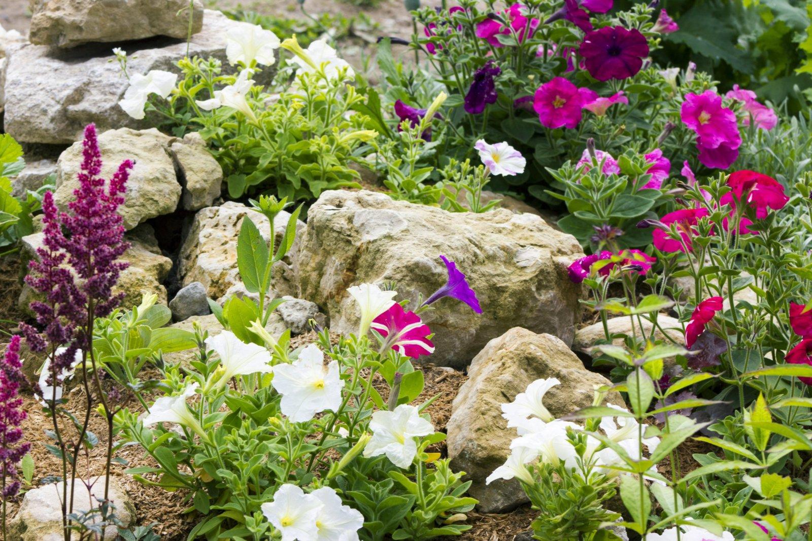 Rock garden with flowers_0.JPG