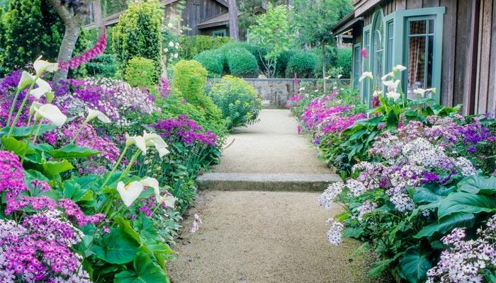 saturday garden.jpg