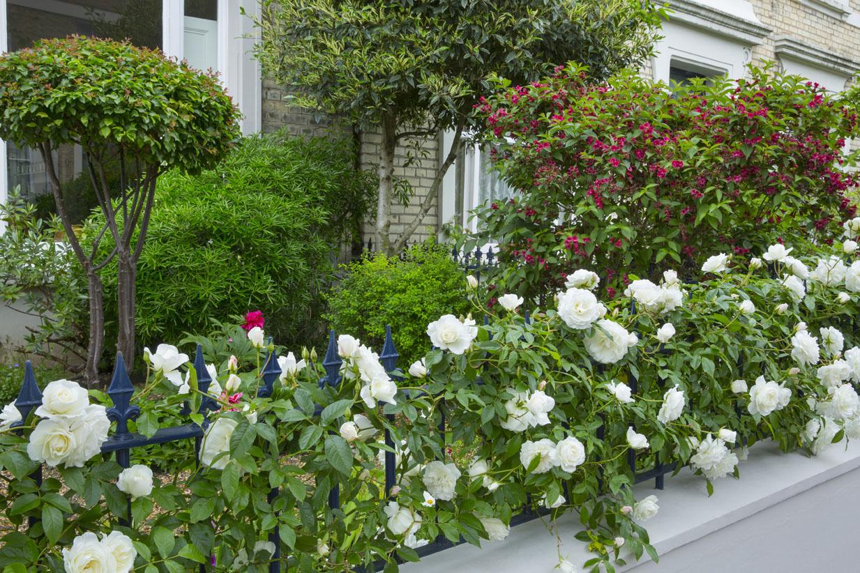 simply-roses-front-garden-mm.jpg