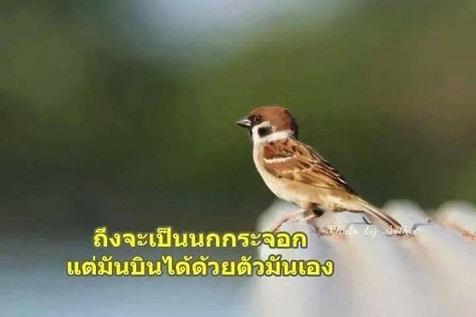 ?temp_hash=fda6eec0747b268342c359639255895f.jpg