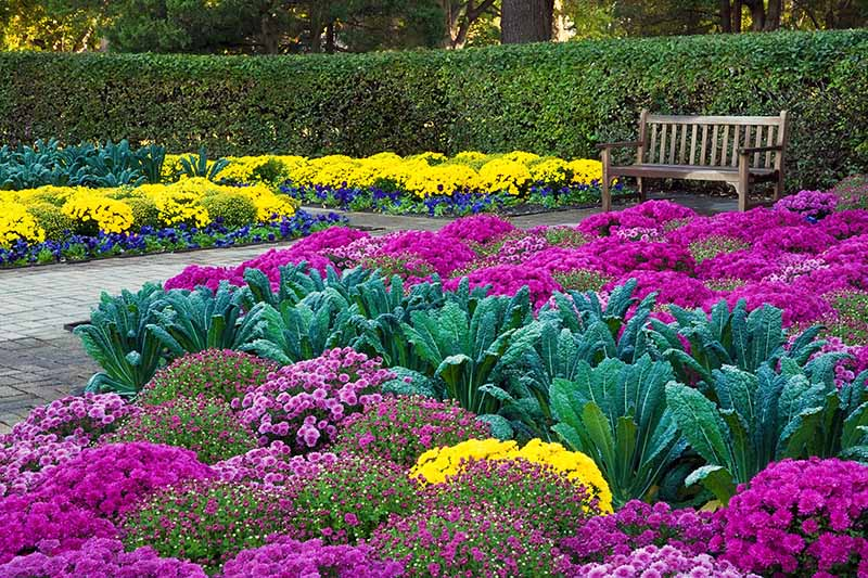 The-Best-Annuals-to-Add-to-the-Garden-for-Fall-Color.jpg