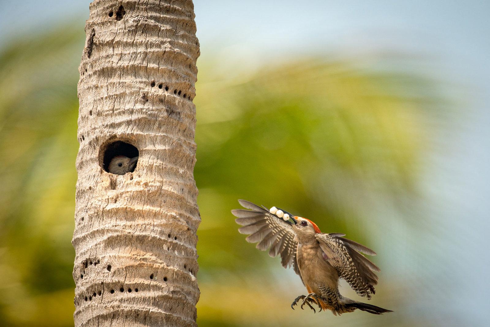 Thursday Bird close-up.jpg