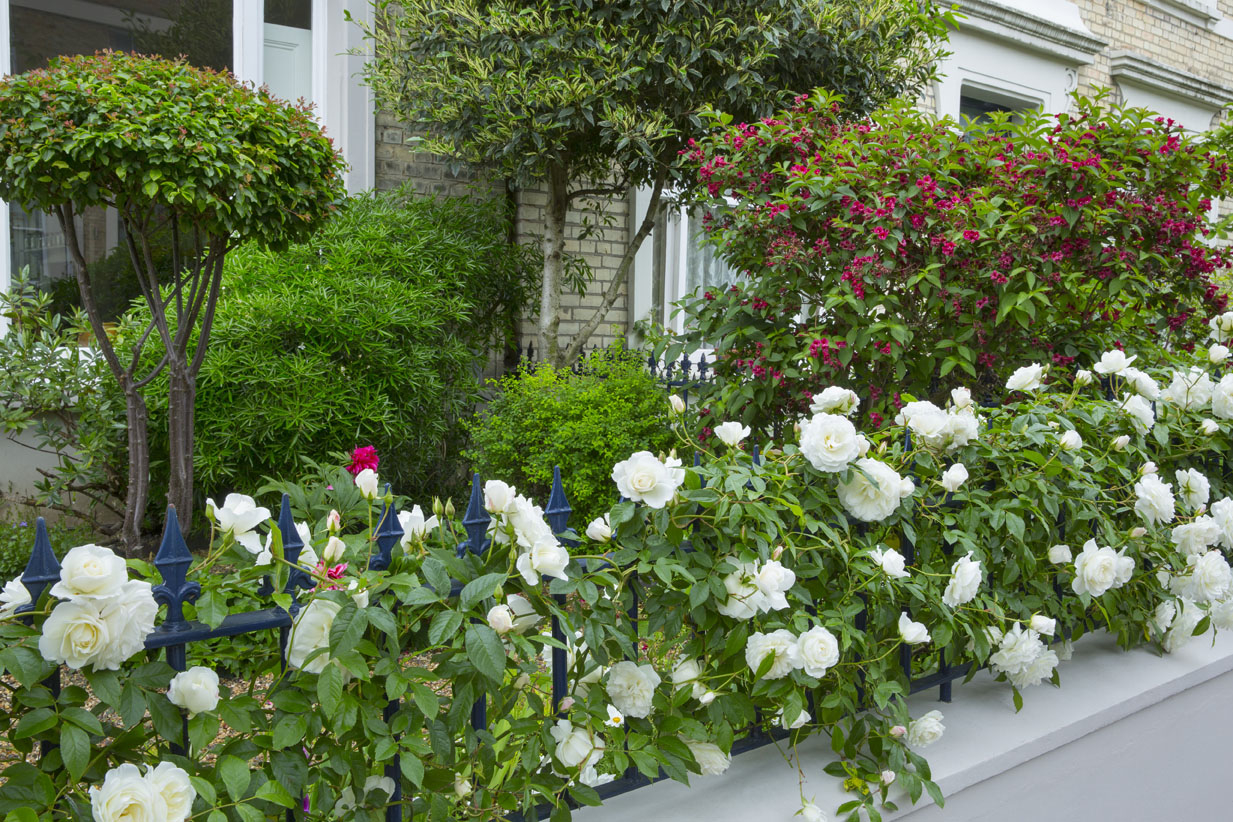 wednesday simply-roses-front-garden-mm.jpg